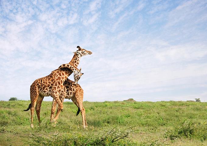 Vé máy bay khuyến mãi đi Tanazana khám phá Công Viên Quốc Gia Serengeti