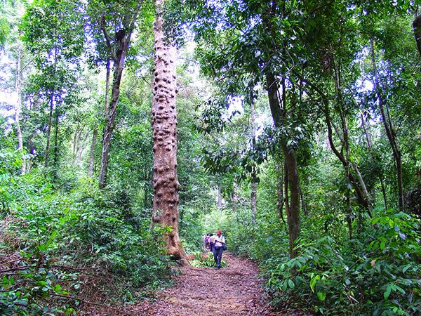 Khám phá các khu rừng nguyên sinh