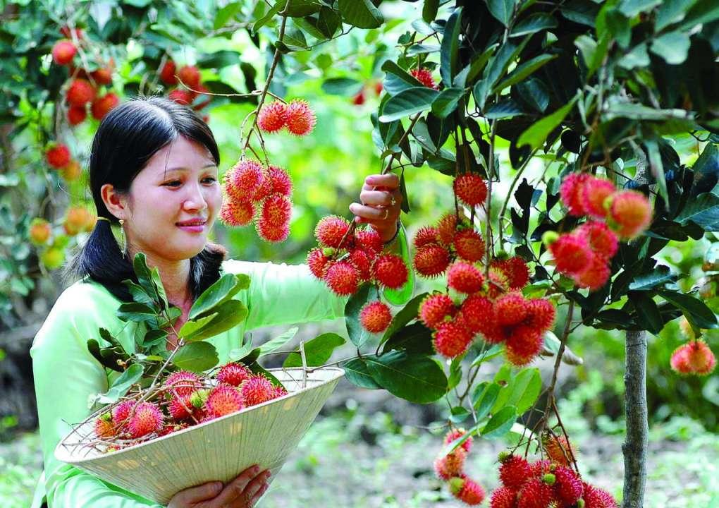 Vườn trái cây Miệt Vườn