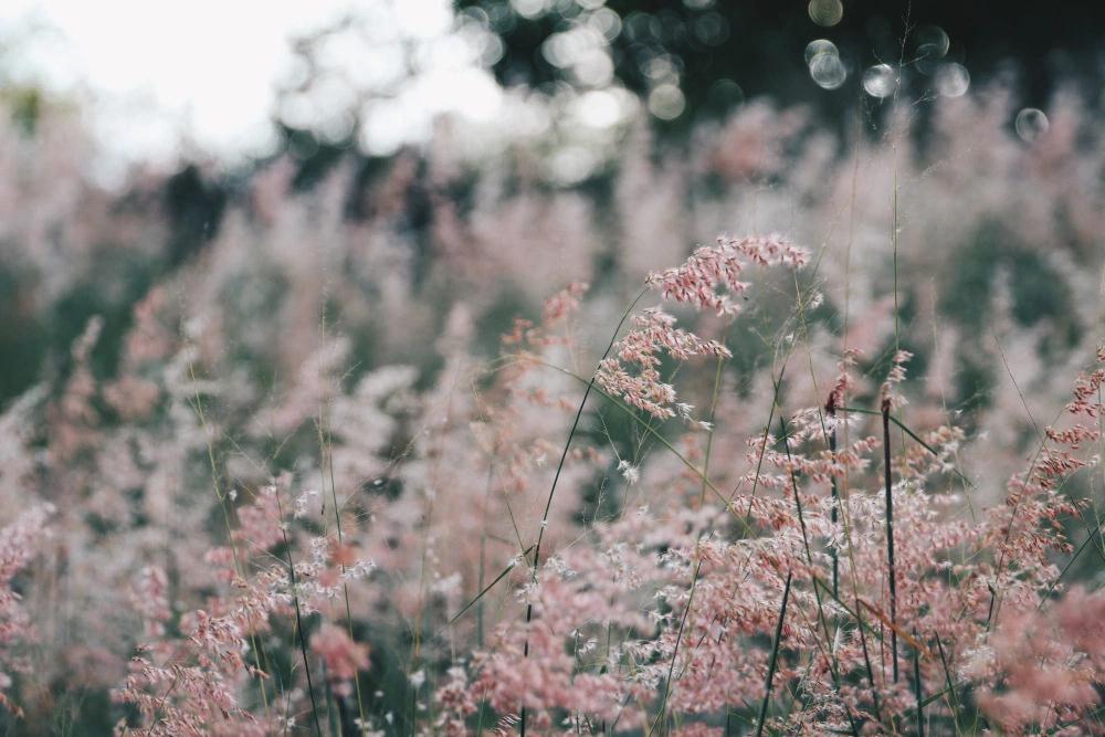 Những bông cỏ lau mong manh càng làm cho khung cảnh thêm thơ mộng và lãng mạn